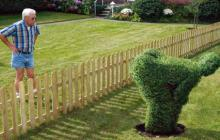 Angry neighbor glaring at shrubbery trimmed into man mooning him